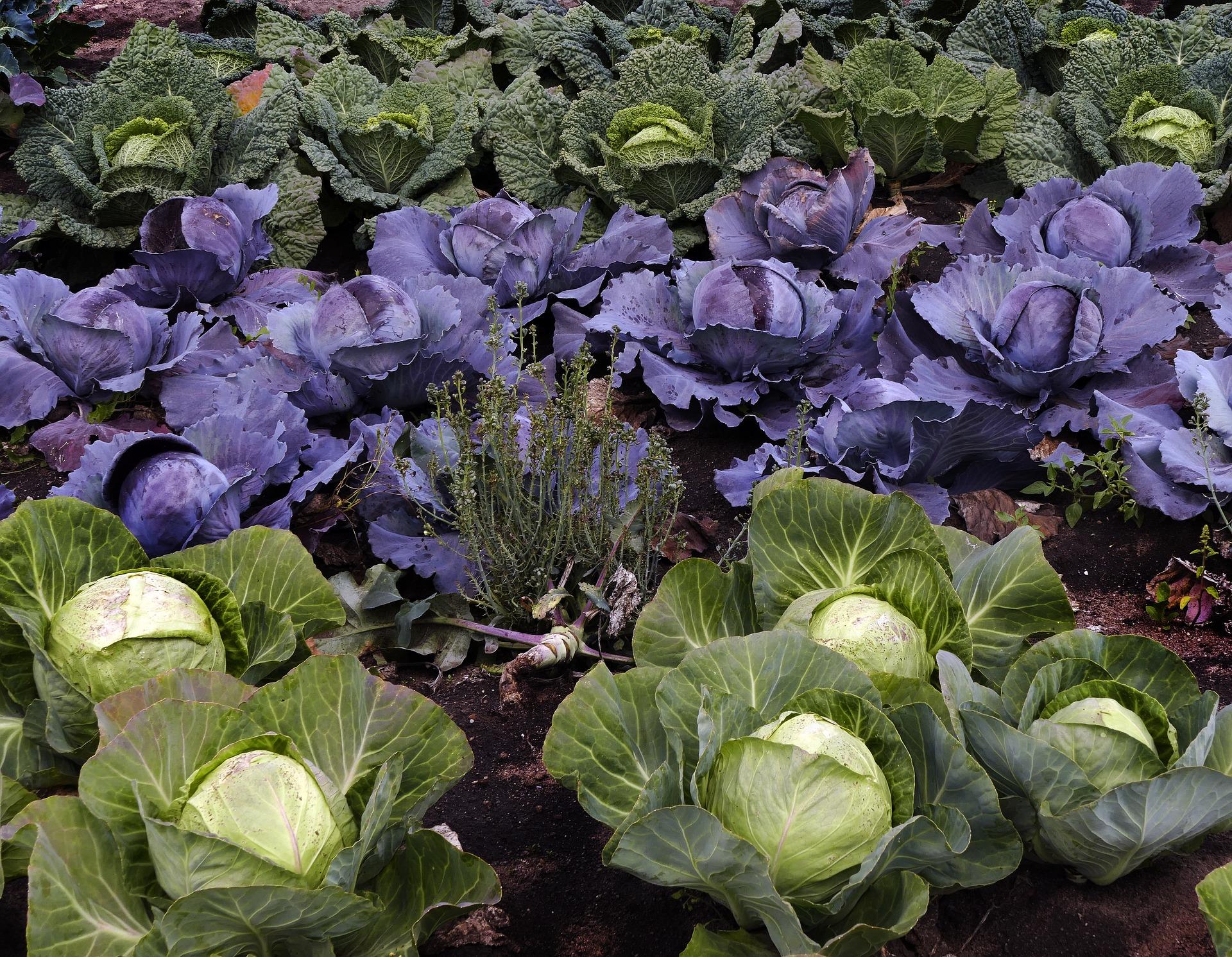 przygotowanie ogrodu warzywnego