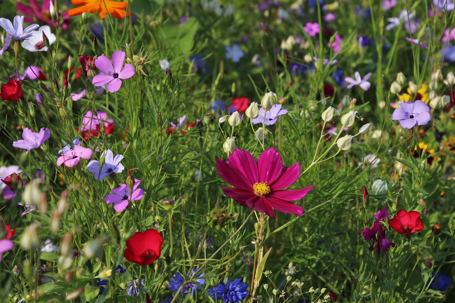 zalety ogrodu kwiatowego