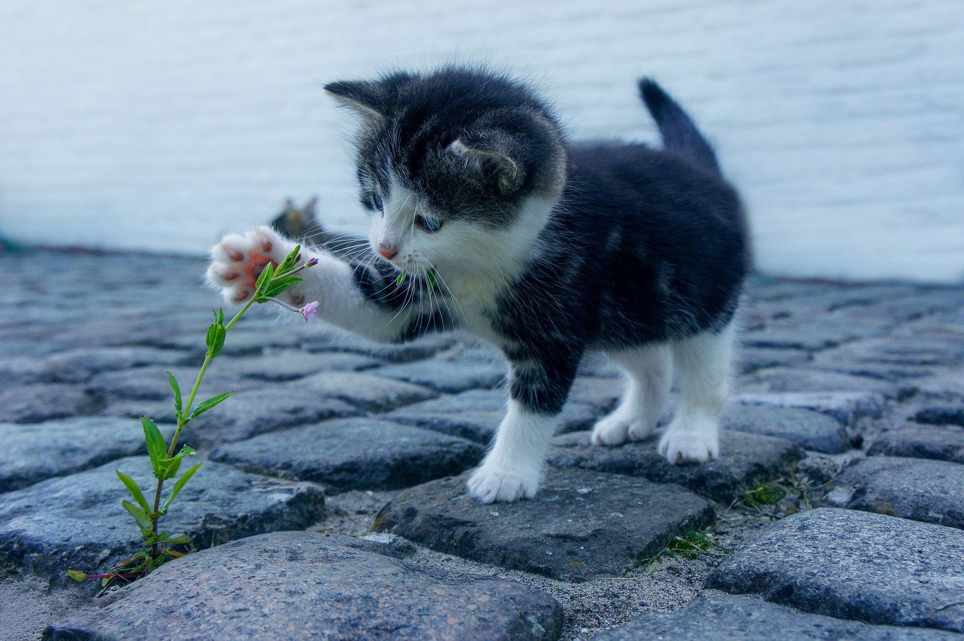 ogródek dla zwierząt