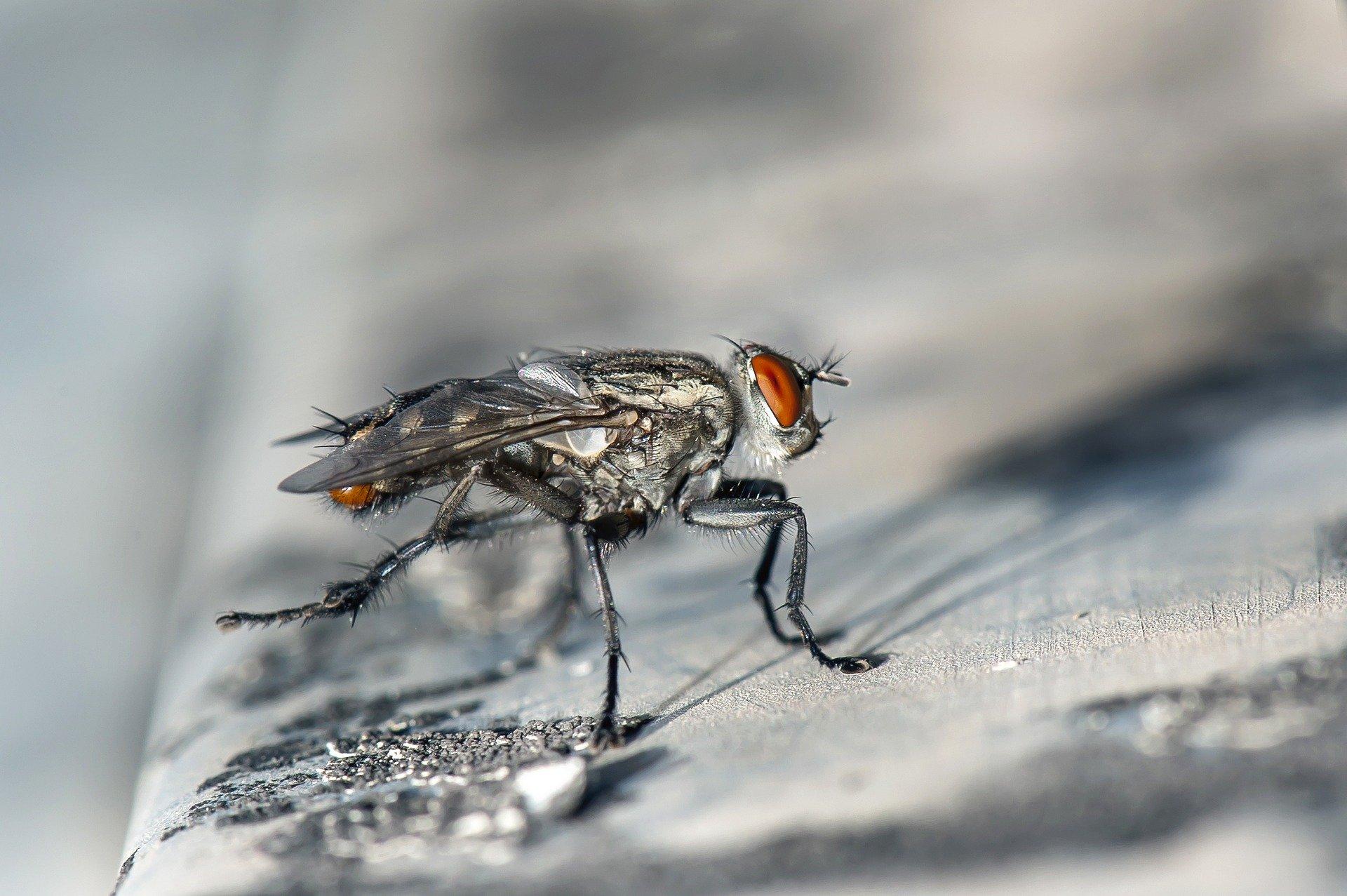 ochrona przed owadami