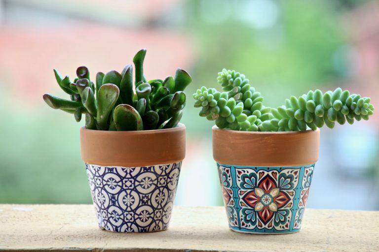 zielone kaktusy