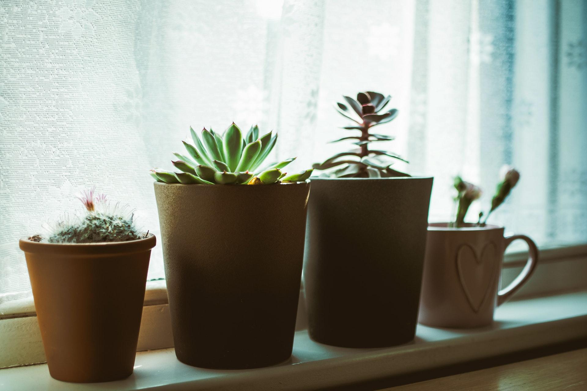 rośliny światłolubne do domu